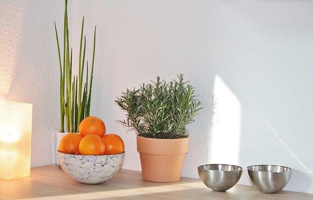 איזה צמחים משפיעים בצורה חיובית על מצב הרוח שלך?